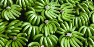 Why you Should Eat Green Bananas?